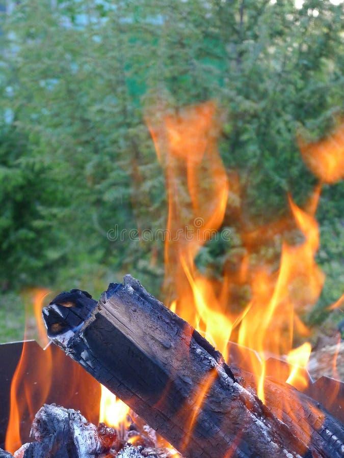 Flammen in einem Wald stockbilder