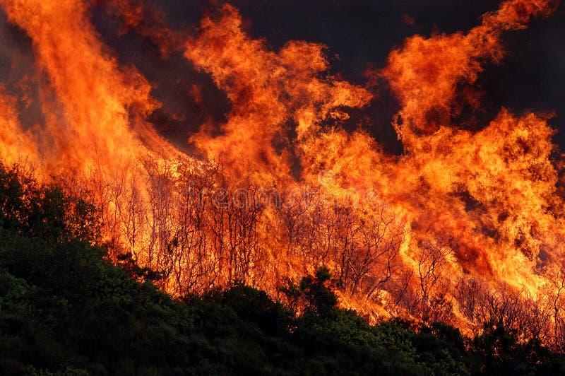 Flammen und Pinsel stockfoto
