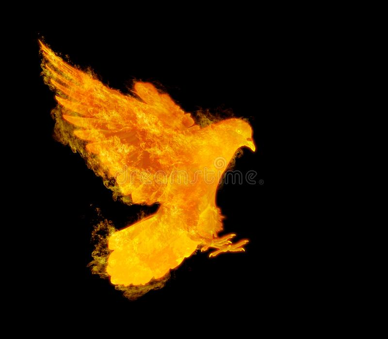 Flammenfliegen-Taubenvogel in der Aktion lokalisiert lizenzfreie stockfotografie
