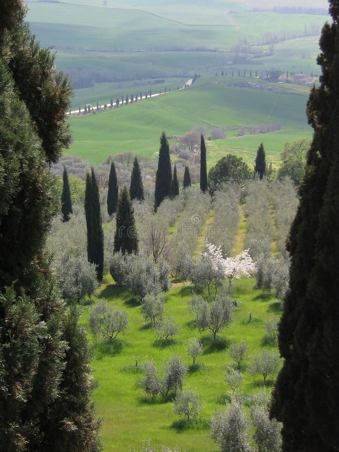 Flanc de coteau toscan, Italie photos libres de droits