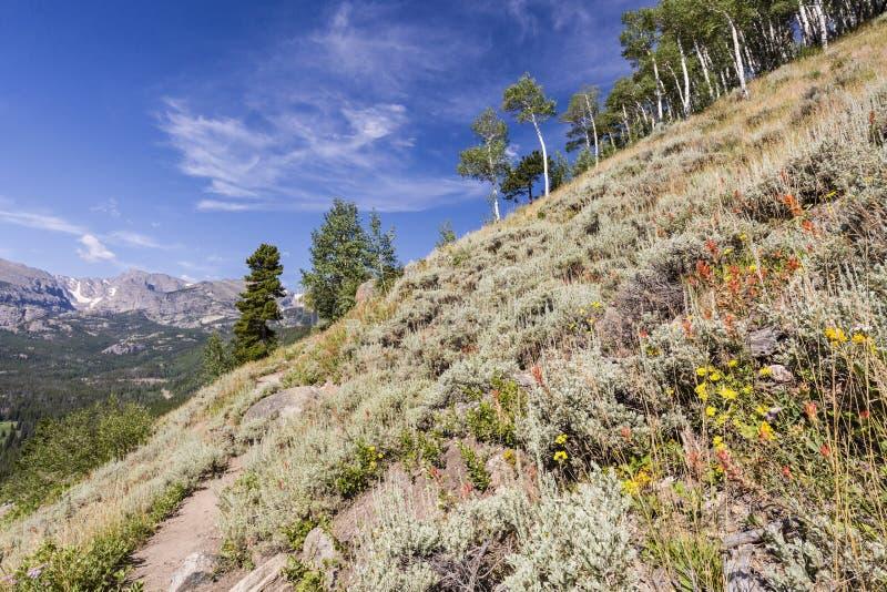 Flanc de montagne de sauge et de Wildflower photos libres de droits
