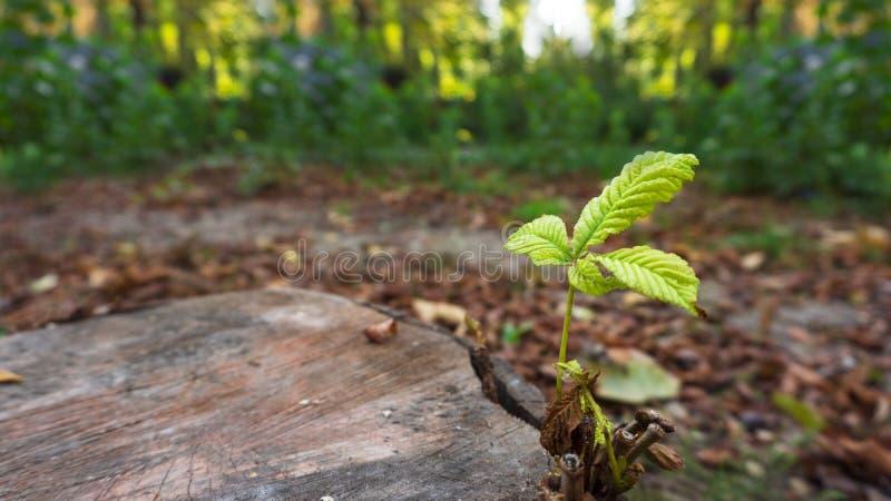 Flance r na starym drzewnym fiszorku w jesieni obraz royalty free