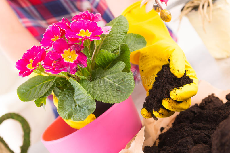 Flancowania colorfull kwiat w flowerpot fotografia stock