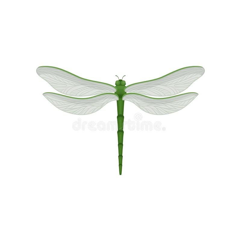 Flar-Vektorikone der schönen Libelle mit Körper des langen Grüns und zwei Paare der großen transparenten Flügel Schnell-Fliegen lizenzfreie abbildung
