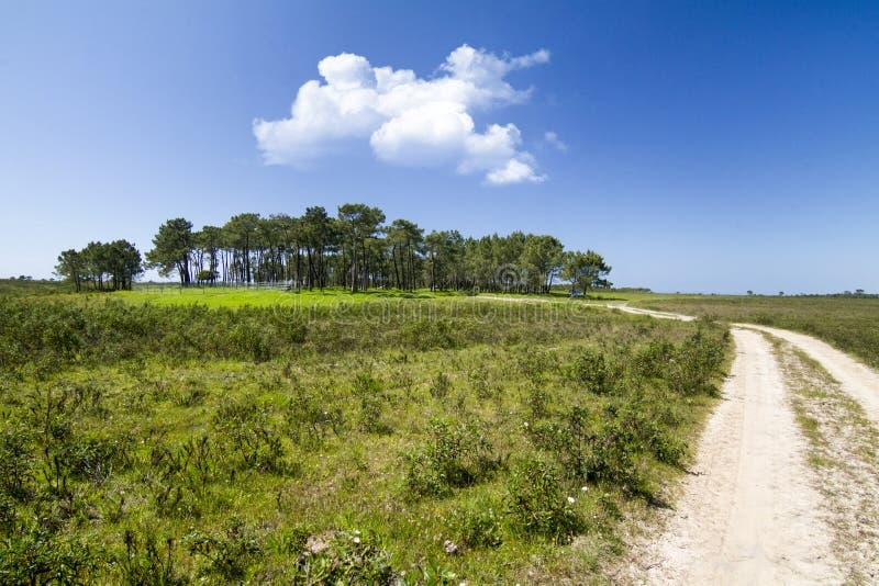 flard van bomen met landweg stock afbeelding