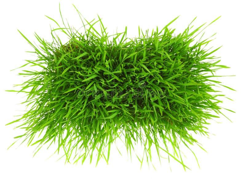 Flard van groen gras stock foto