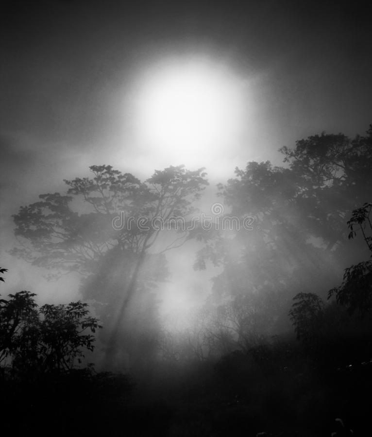 A view foggy in Glory morning with the Sun. The flare of the morning sun when the thick fog came in the trees stock photo