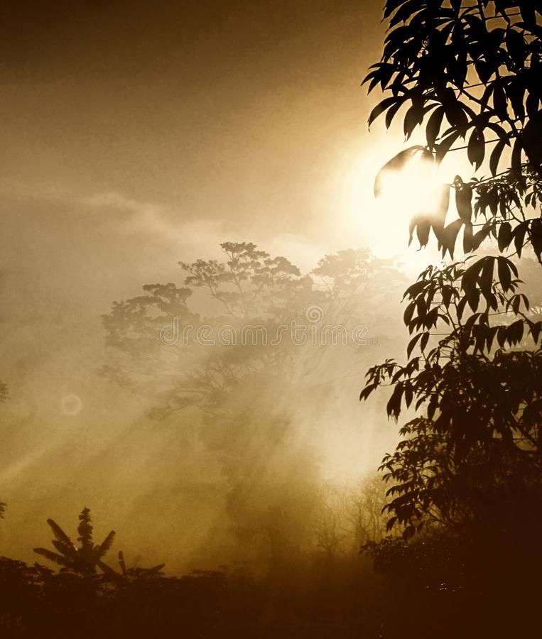A view foggy in Glory morning with the Sun. The flare of the morning sun when the thick fog came in the trees royalty free stock photography