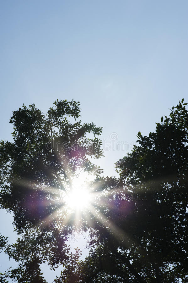 Flare sunlight through tree stock images