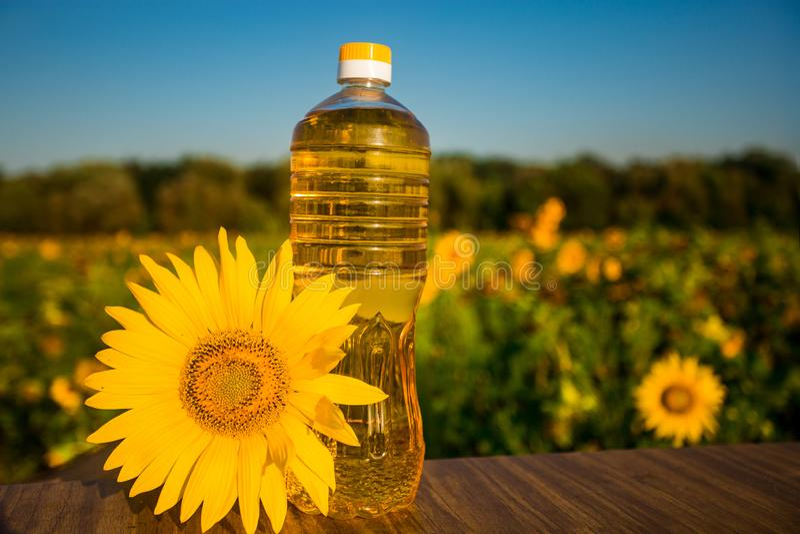 Flasche Öl auf hölzernem Stand mit Sonnenblumenfeldhintergrund Sonnenblumenöl verbessert Hautgesundheit stockbild