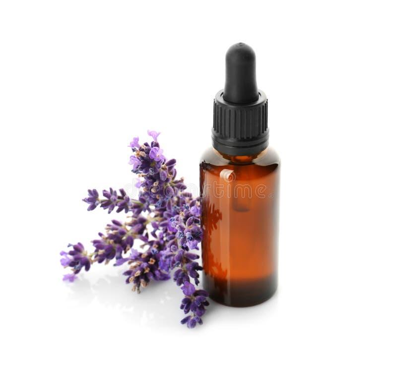 Flasche mit Aromaöl und -lavendel blüht auf weißem Hintergrund lizenzfreies stockbild