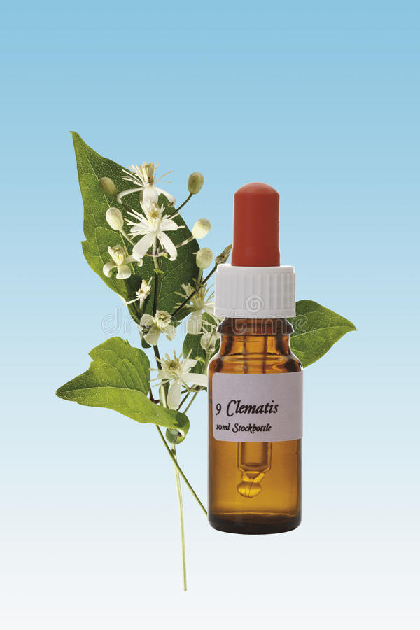 Flasche mit Bach-Blumen-Vorrat-Abhilfe, Klematis (Klematis vitalba) lizenzfreie stockfotos