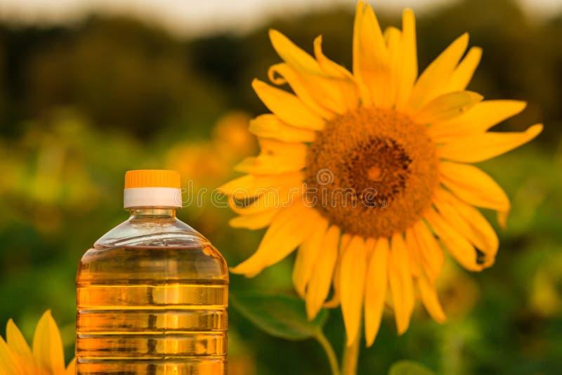 Flasche Sonnenblumenöl Sonnenblumenöl verbessert Hautgesundheit stockfotografie
