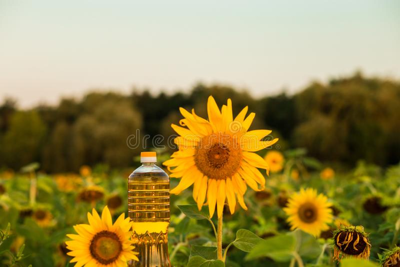 Flasche Sonnenblumenöl Sonnenblumenöl verbessert Hautgesundheit lizenzfreies stockbild