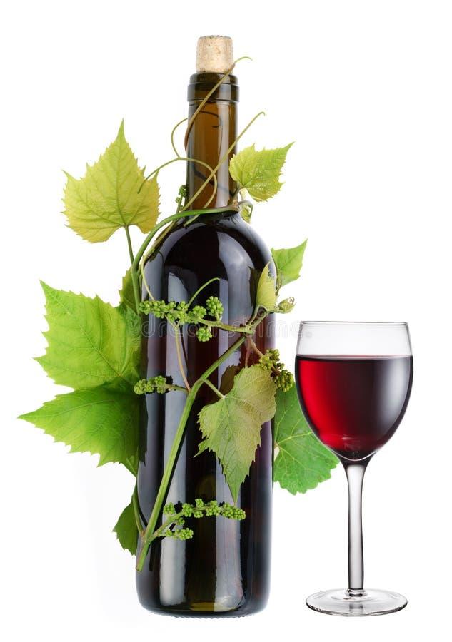 Flasche Wein in der Rebe stockfoto
