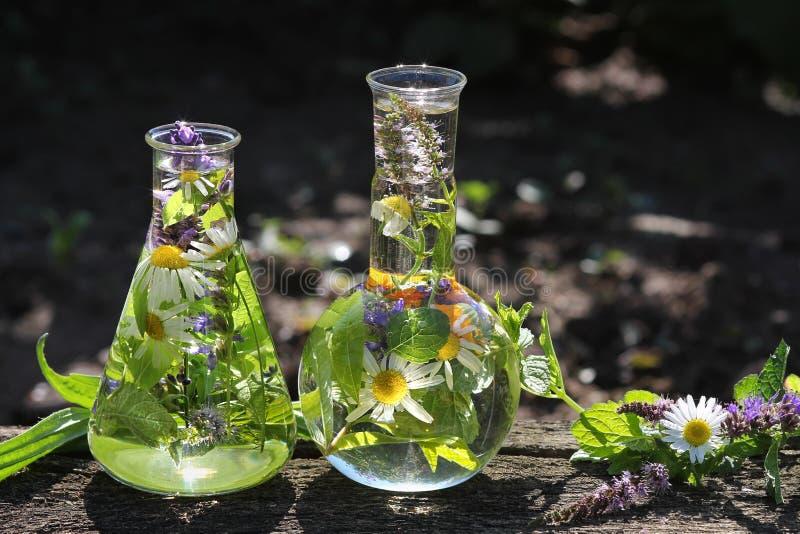 Flaschen mit medizinischen Kräutern stockfotos