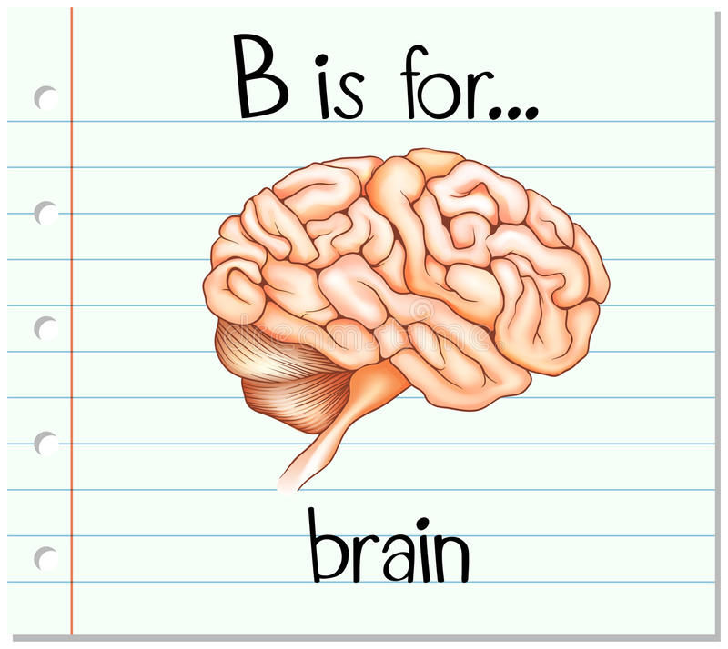 Flashcard字母表B是为脑子 库存例证
