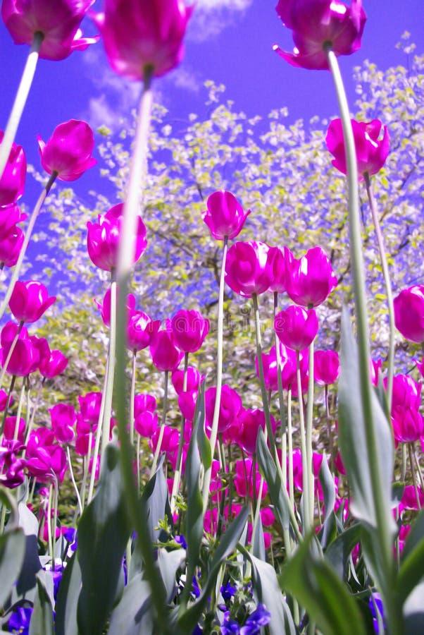 Flashy flowers royalty free stock photo