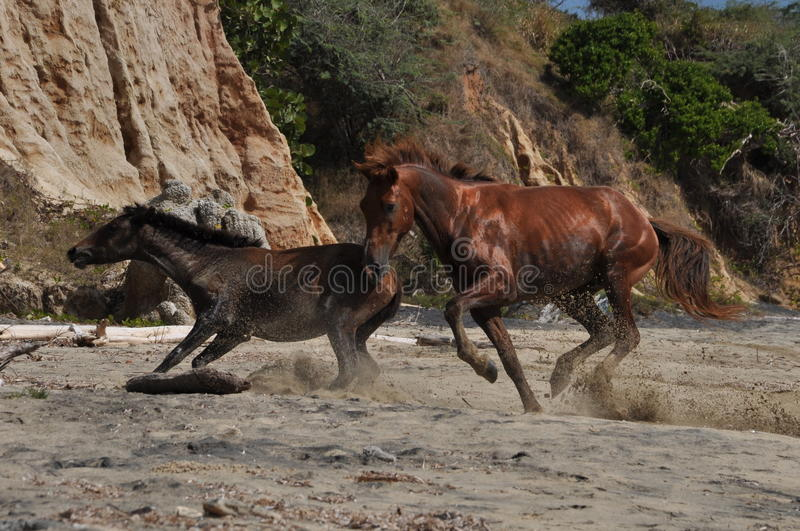 Download Flashy stallion stock photo. Image of nature, action - 23229698