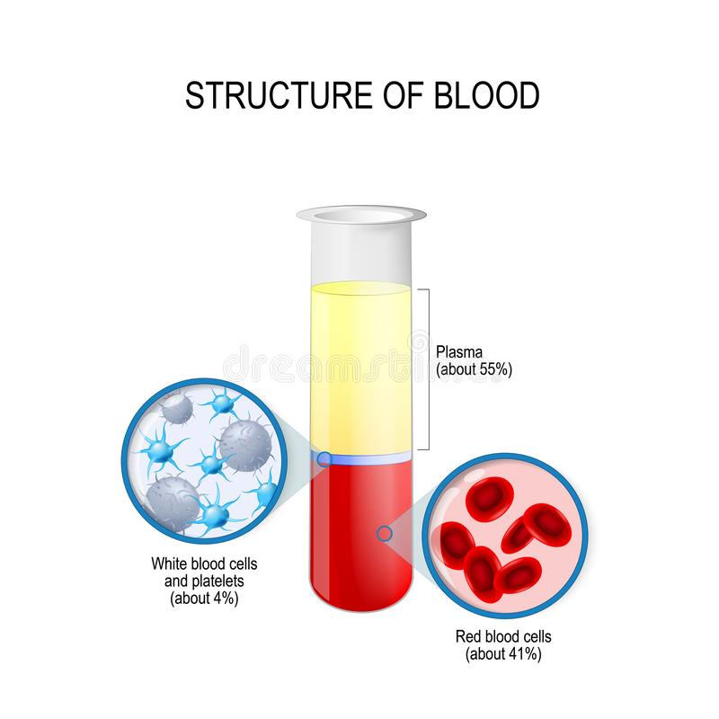 Flask with blood components: red and white blood cells, plasma, and platelets royalty free illustration