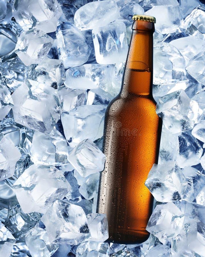 Flaska av öl i iskuber royaltyfri foto