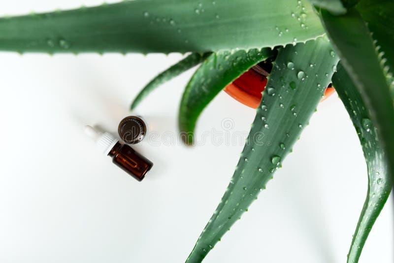 Flaska av aloevera nödvändig olja med den nya växten - naturlig skönhetbehandling royaltyfri bild