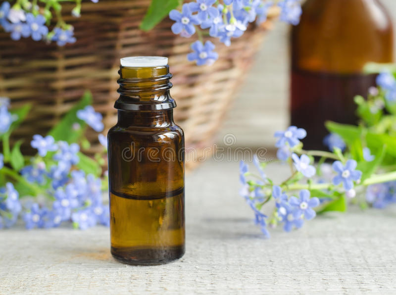Flaska av nödvändig olja (förgätmigejblommatinktur) royaltyfri bild