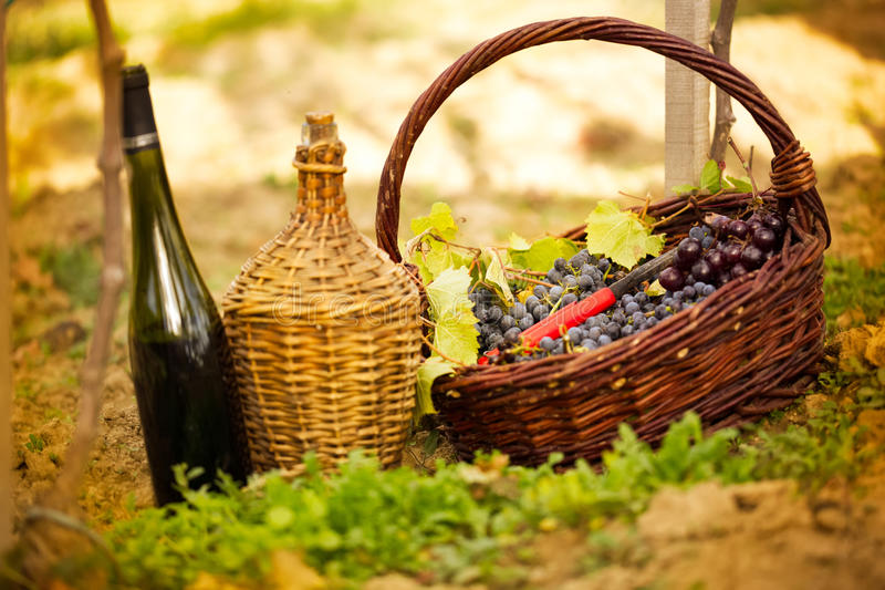 Flaska av vin och druvor i korg royaltyfria bilder