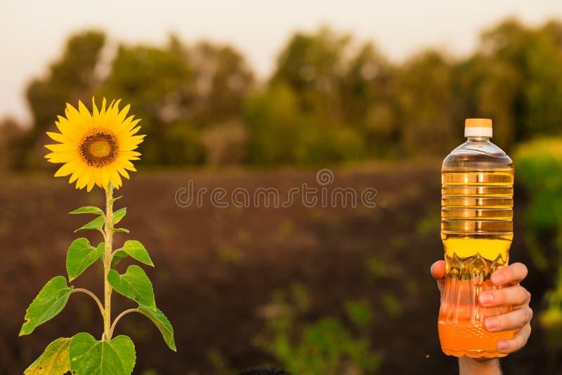 Flaska för håll för hand för man` s av solrosolja Solrosolja förbättrar hudhälsa arkivbild