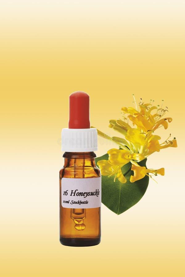 Flaska med boten för Bach blommamateriel, kaprifol (Loniceracaprifoliumen) royaltyfria bilder