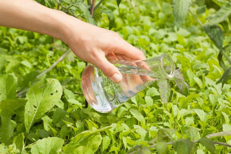 Flaska med klart vatten och gröna växter royaltyfria foton