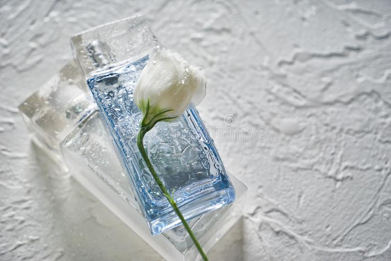 Flaskor med dofter och blomman på ljus texturerad bakgrund arkivbild