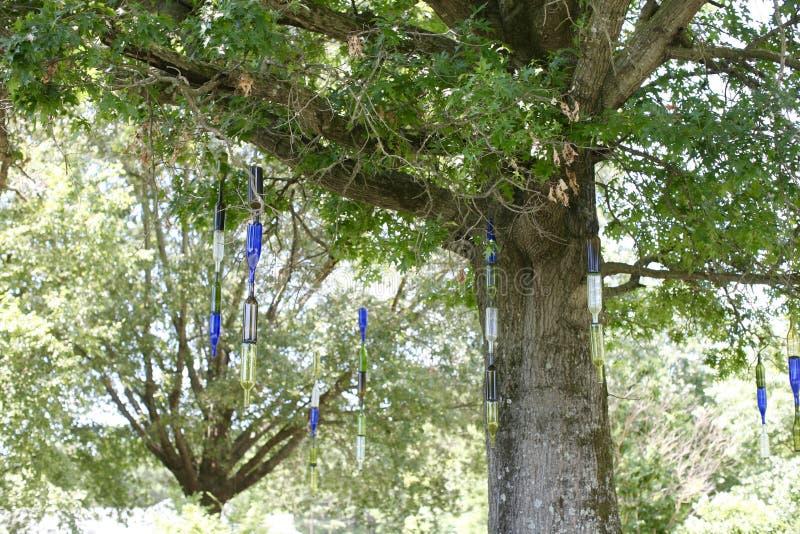 Flaskor som hänger från träd på den västra Tennessee Agricultural Research Center arkivfoton