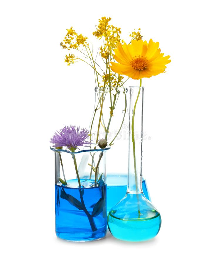 Free Flasks And Beaker With Flowers On White Background Stock Image - 151127961
