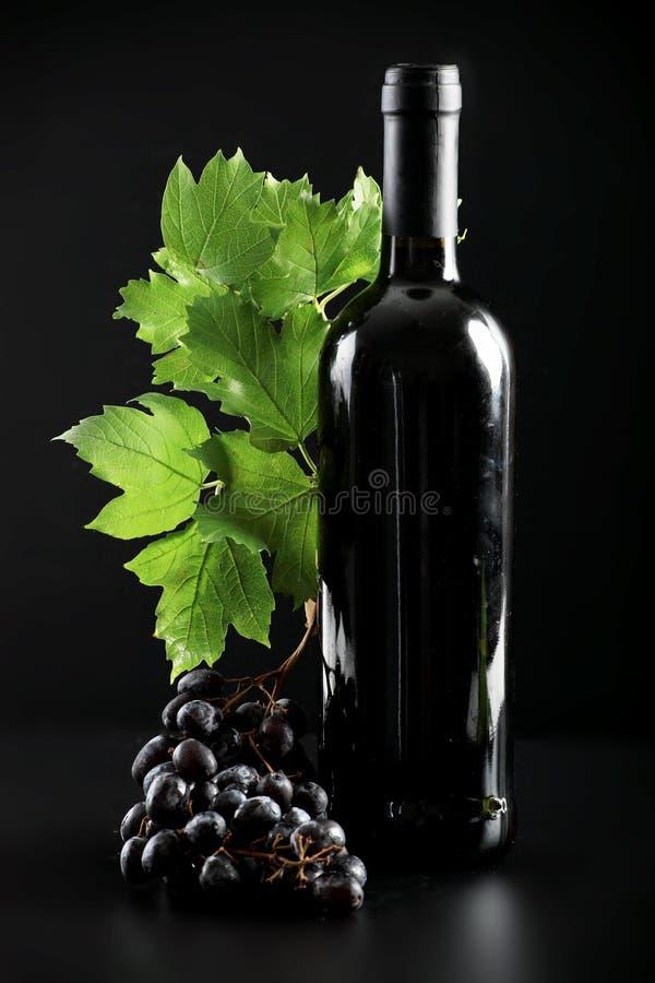 flaskvine royaltyfri foto