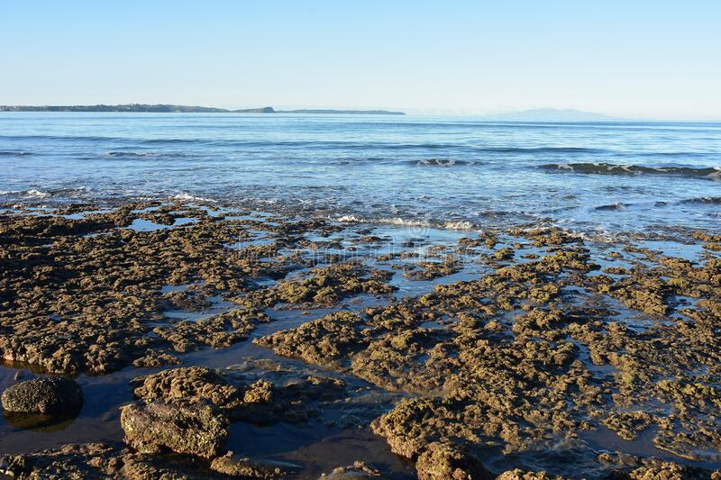 Flat coastal rocks at low tide stock photo