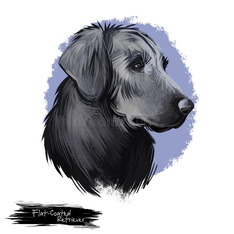 Flat Coated Retriever, Flatcoat, Flattie, Flatte, Flatt dog digital art illustratie geïsoleerd op witte achtergrond Britse oorspr royalty-vrije stock foto