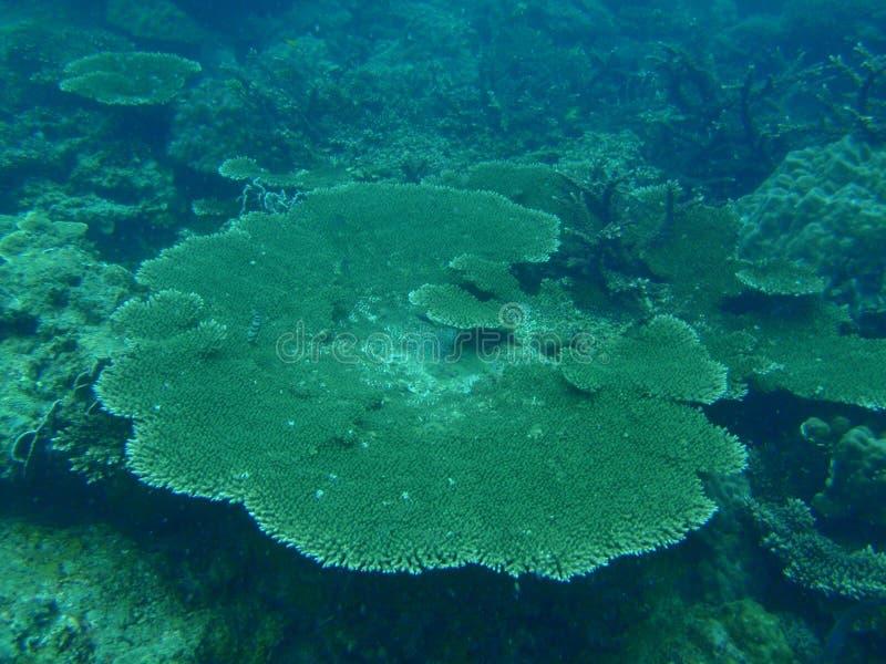 Flat coral royalty free stock photos