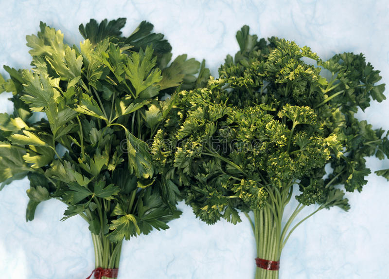 Download Flat and curly parsley stock photo. Image of blue, focus - 23705158