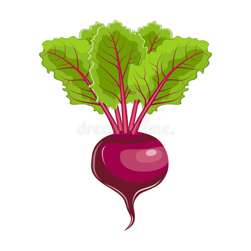 Flat icon beet with leaves. Beet with leaves icon. Farm fresh beet product emblem for grocery shop, vegetarian vegetable juice label, sticker design. vector stock illustration