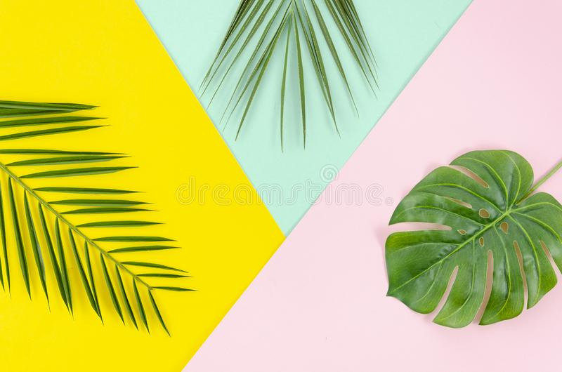 Flat lay border arrangement with Phoenix and Monstera palm leaves on pop multicolor background stock image