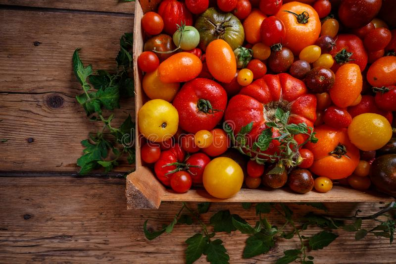 Flat lay of colorful tomatoes stock photos
