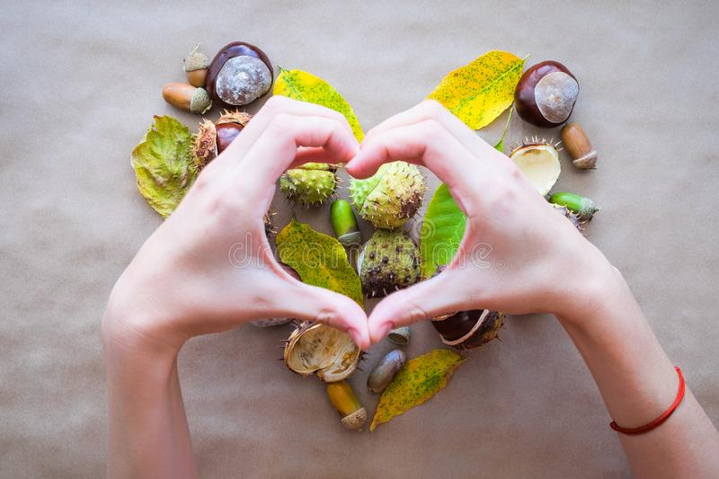 Flat lay composition for autumn holidays Thanksgiving greeting cards. Acorns, leaves, chestnuts with woman hands in the shape of a royalty free stock photos