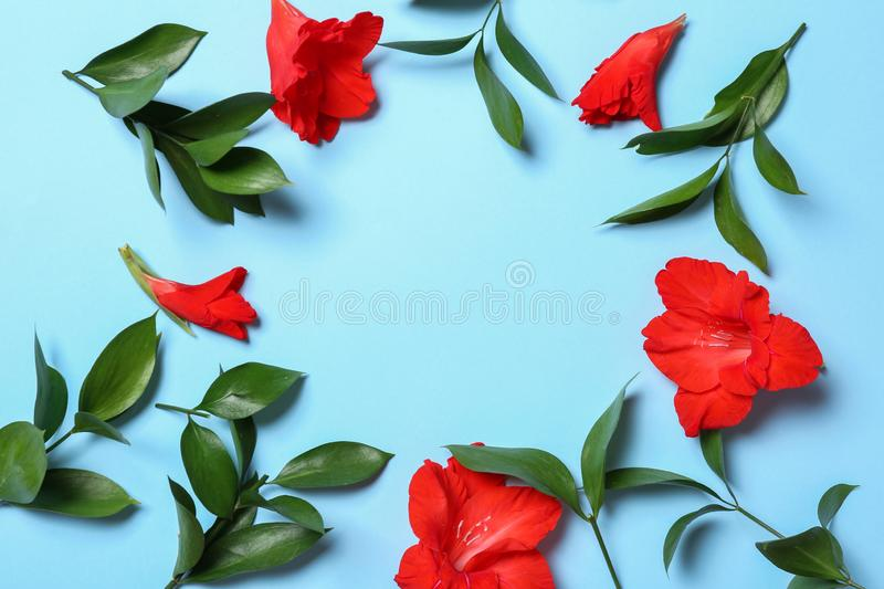 Flat lay composition with beautiful gladiolus flowers on blue background. Space for royalty free stock image