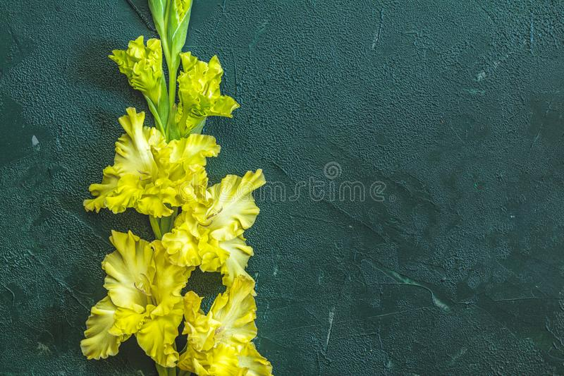 Flat lay composition with beautiful gladiolus flowers on dark green concrete background. Pattern of gladiolus with space for your. Text, holiday greeting card royalty free stock image