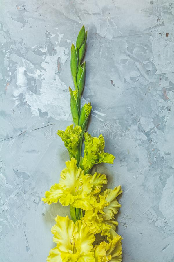 Border frame made of yellow gladiolus on gray concrete background. Flat lay composition with beautiful gladiolus flowers on gray concrete background. Pattern of stock images