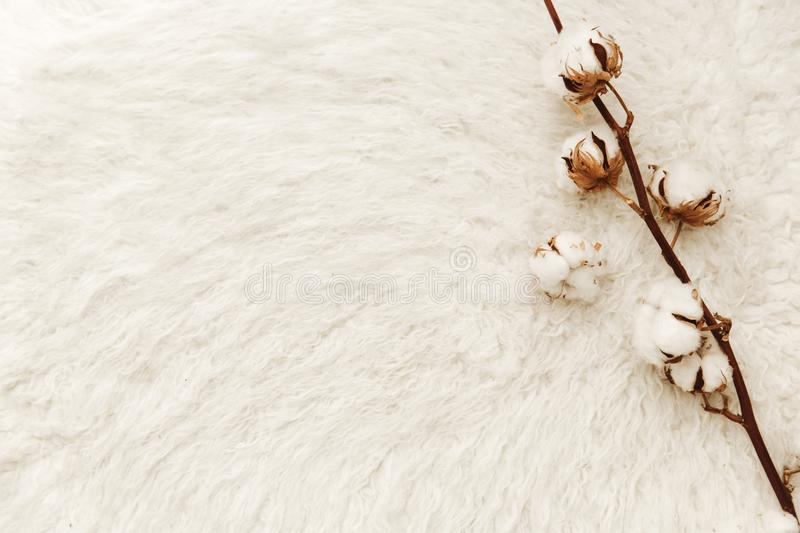 Flat lay composition with cotton. Blogger concept royalty free stock images