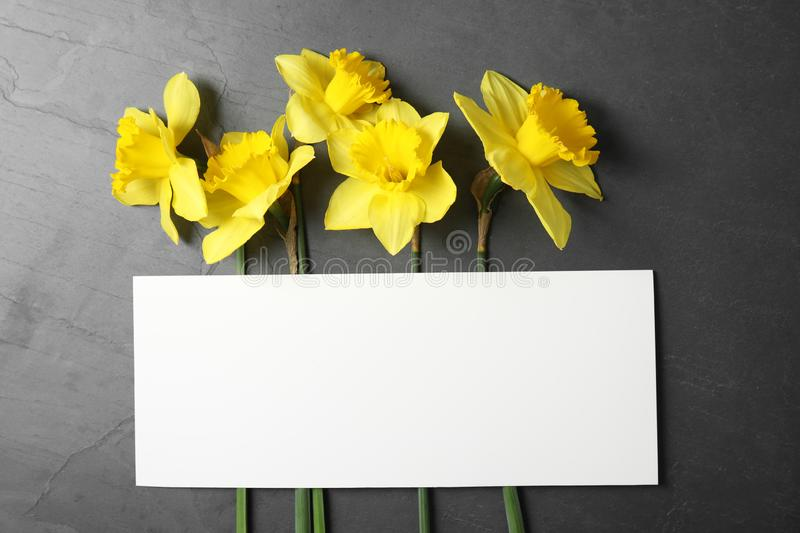Flat lay composition with daffodils and card on dark background. Fresh spring flowers. Flat lay composition with daffodils and card on dark background, space for stock photos