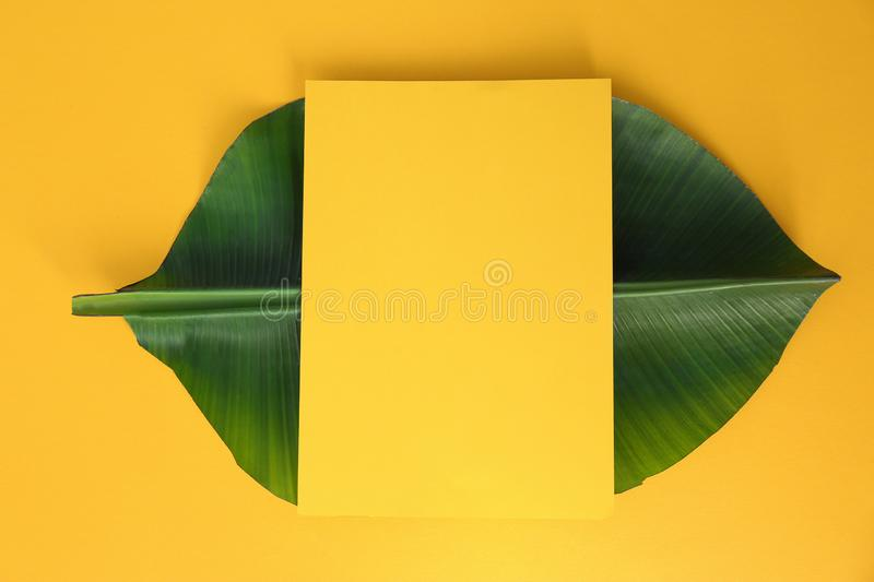 Flat lay composition with green banana leaf and space for text on color background. Tropical foliage stock photo