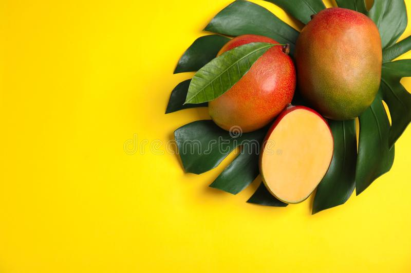 Flat lay composition with ripe mangoes, monstera leaf and space for text. On color background royalty free stock photo